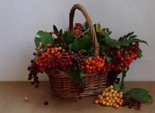 обоя еда, рябина, ягоды, корзина, натюрморт, волчьи, калина, лето