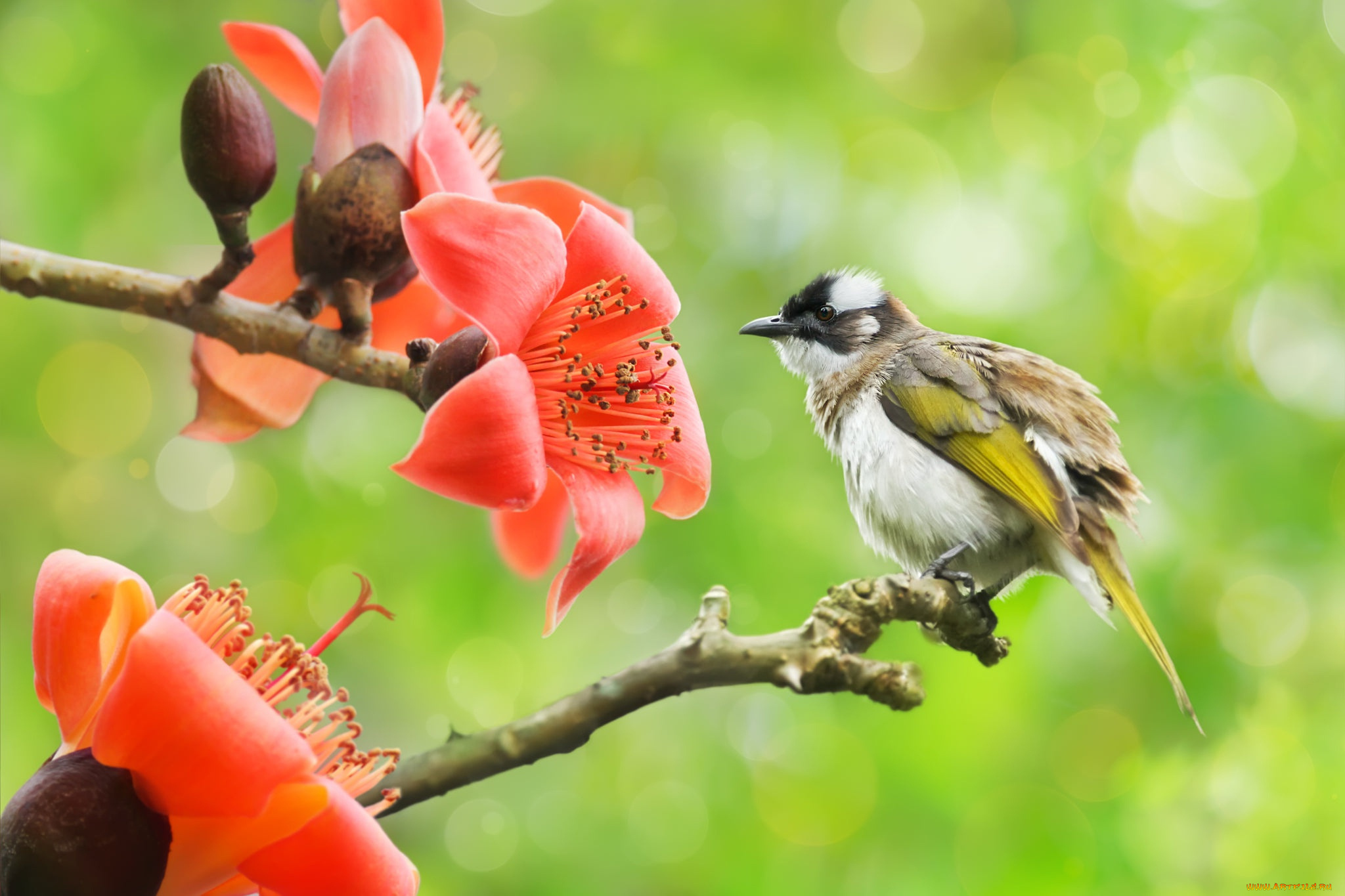 природа птица ветка животное без смс