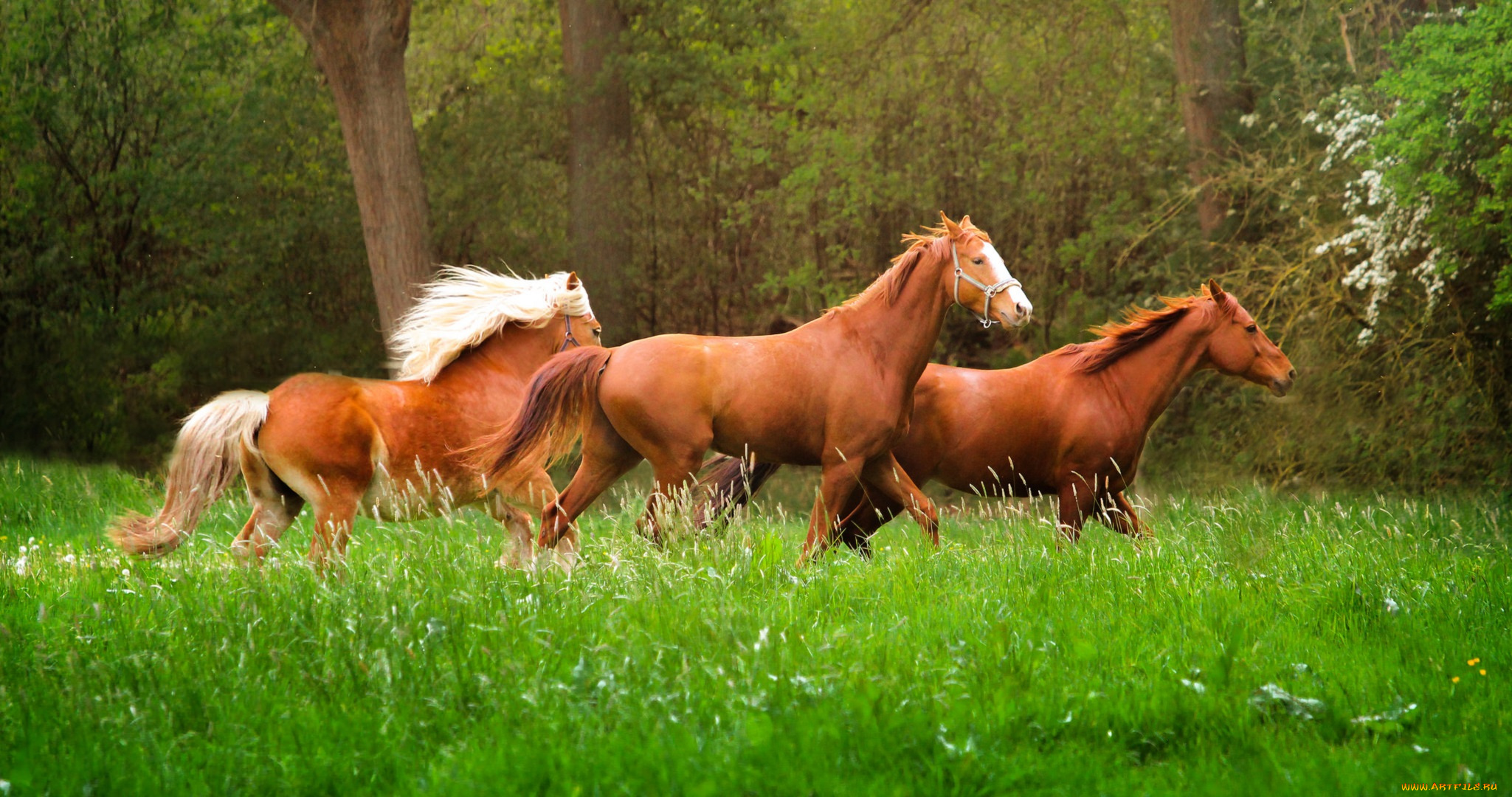 природа животные лошади бесплатно