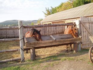 обоя на обеде, животные, лошади