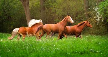 обоя животные, лошади, бег, животное, природа, трава