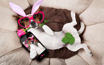 обоя юмор и приколы, rose, holiday, happy, собака, сердечки, funny, роза, bunny, ears, pink, очки, уши, dog