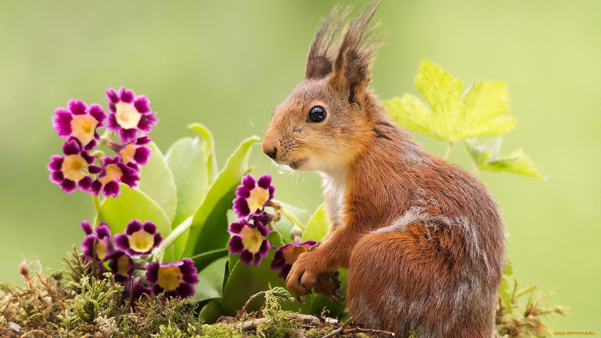 белка, цветы, синие, листья загрузить