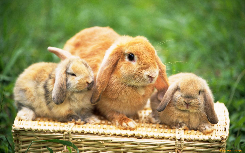 для фото с тремя зайцами красива, артистична