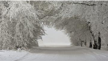 Картинка природа зима деревья пейзаж снег дорога