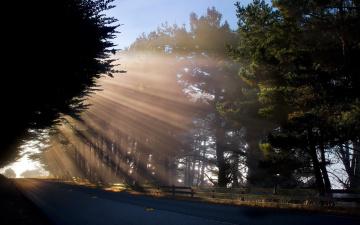 Картинка природа дороги деревья лучи дорога