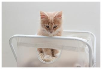 Картинка животные коты котенок