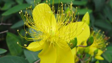 Картинка цветы желтый