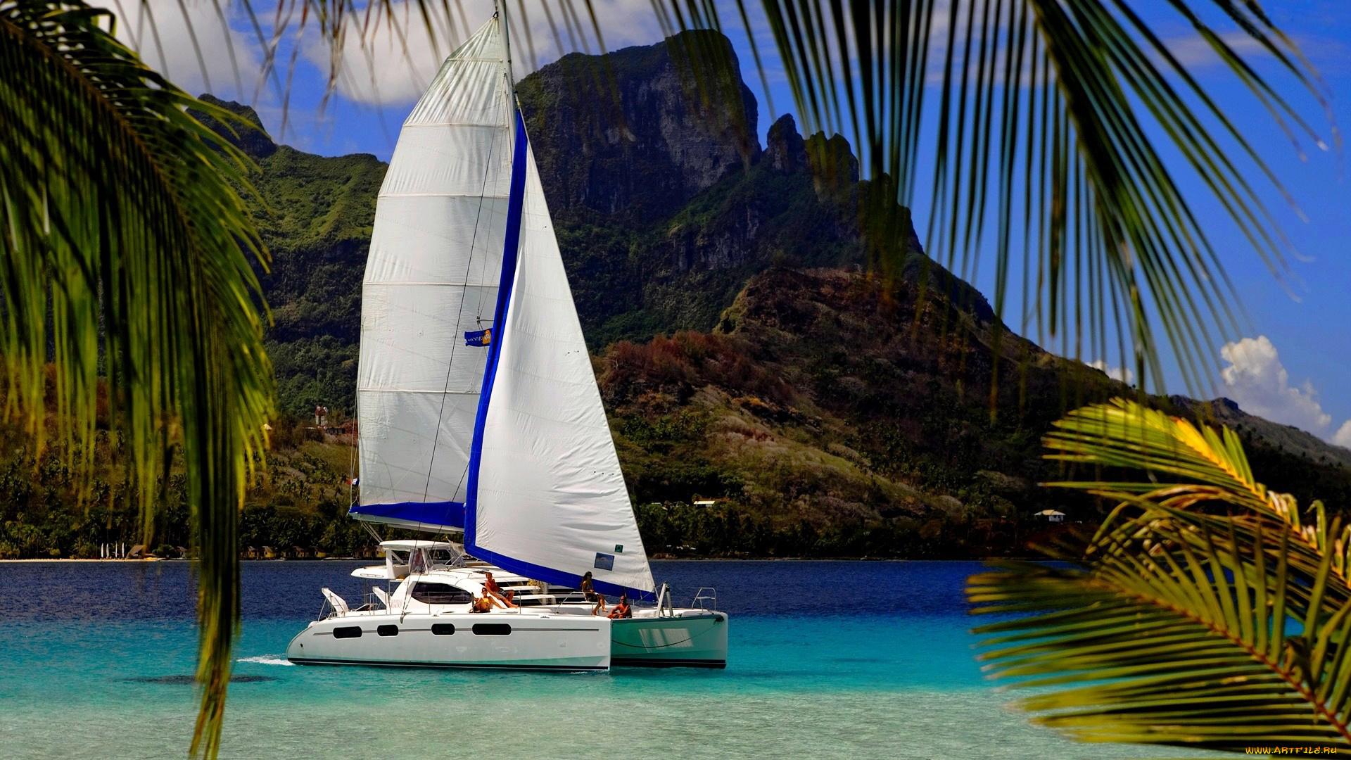 фотограф фото пальмы море парусник необычные, выбору подошли