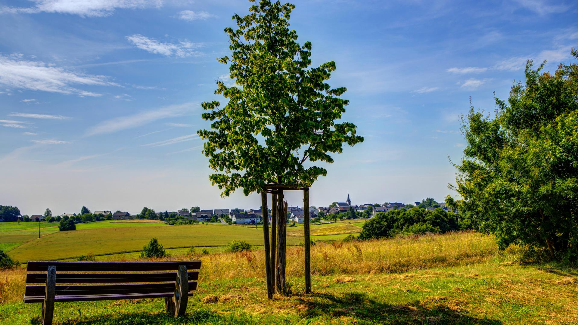 дерево скамейка закат трава скачать
