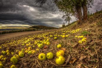 обоя еда, Яблоки, яблоки