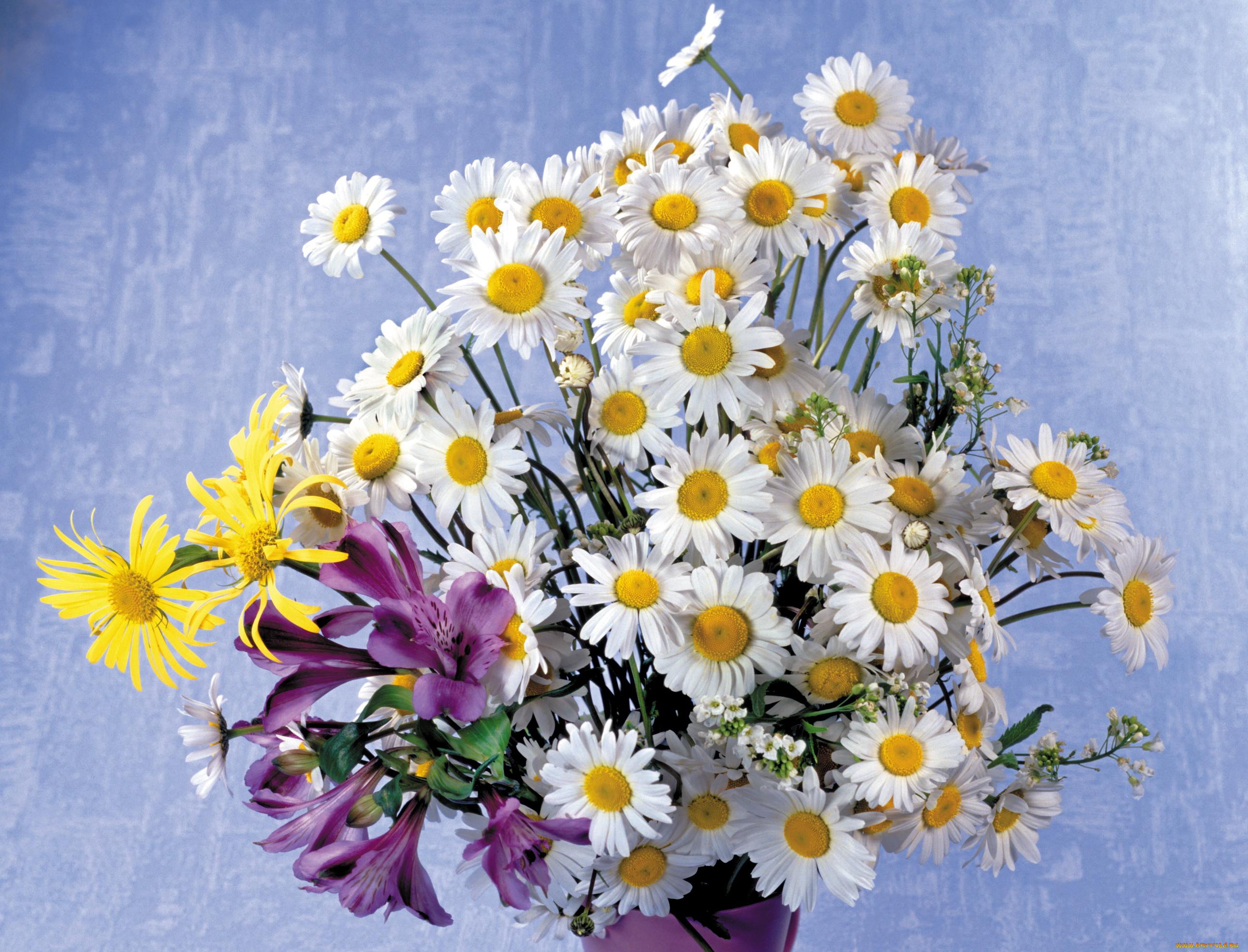 Картинка с днем рождения полевые цветы, обидно