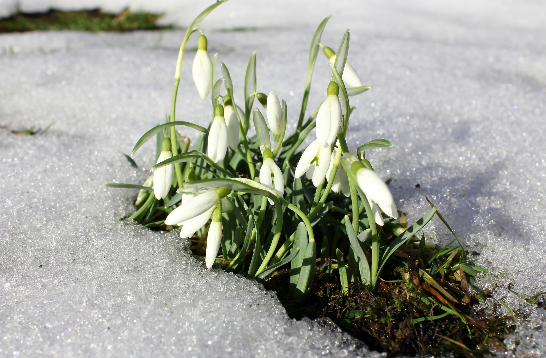 Картинки весны с подснежниками, добрых делах поступках
