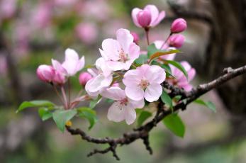 Картинка цветы цветущие+деревья+ +кустарники весна