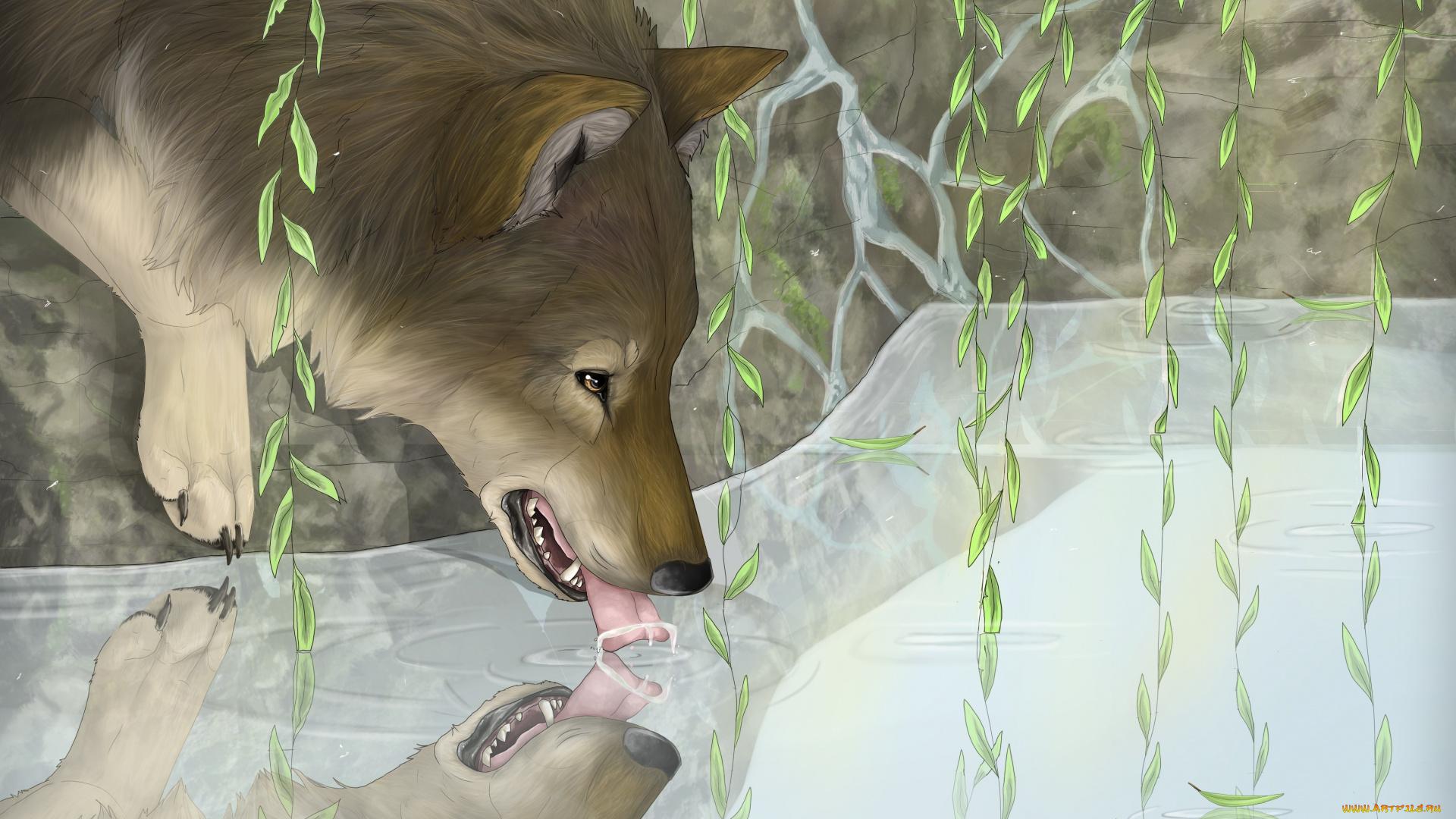 Шакира волк фото растения