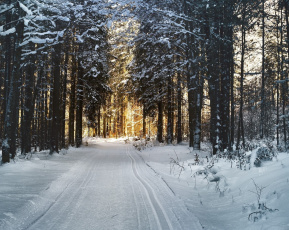 обоя природа, дороги, дорога, деревья, снег