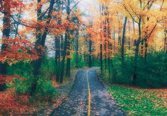 обоя природа, дороги, дорога, лес, деревья