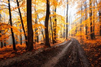 обоя природа, дороги, лес, дорога