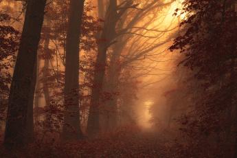 Картинка природа лес дорога