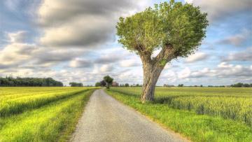 обоя природа, дороги, поле, дорога, деревья, пейзаж