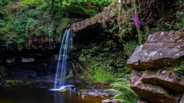 обоя природа, водопады, цветок, камни, поток