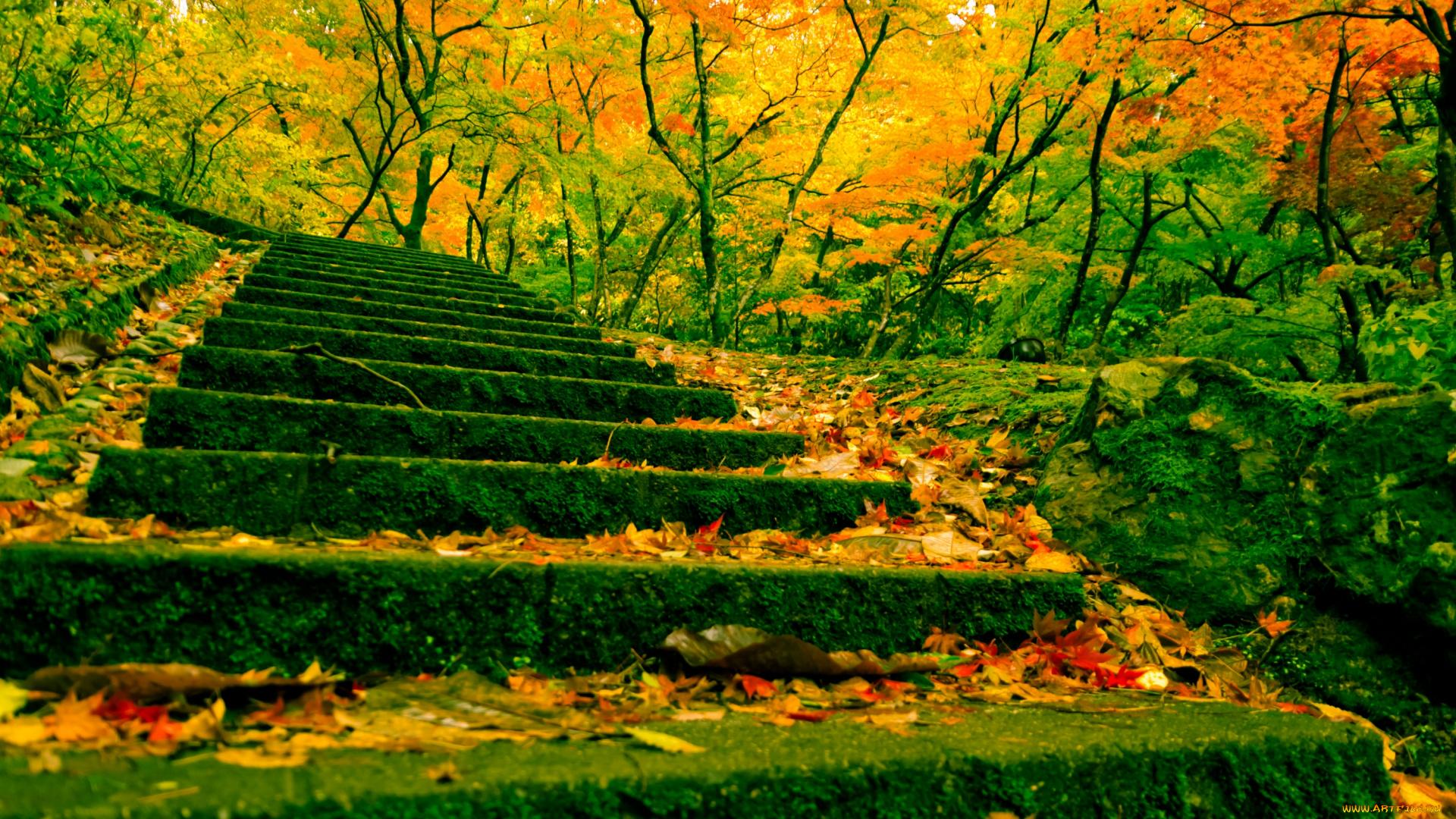 Китай лестницы  № 2448834 бесплатно