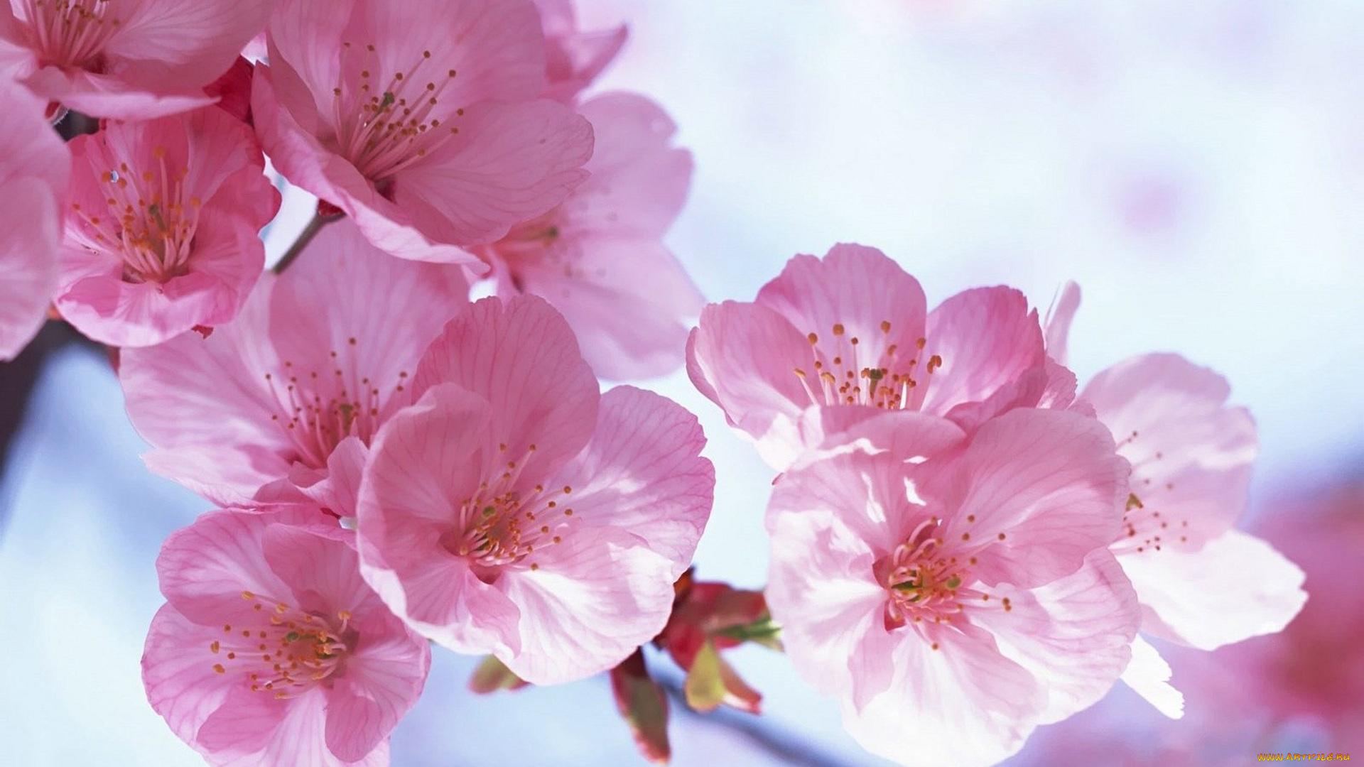 Открытки с днем рождения женщине красивые цветы весенние, цыплята картинки картинка