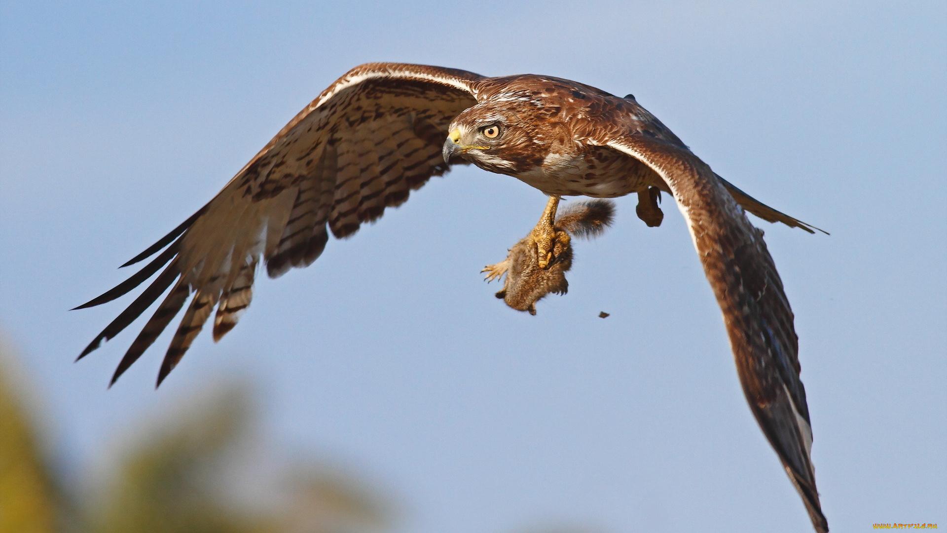 автодромов, где хищные птицы на охоте фото каталог