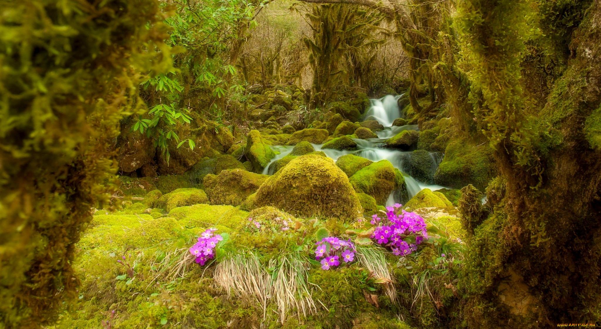 природа вода река трава деревья мох  № 3800923 без смс