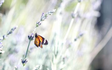 Картинка животные бабочки бабочка