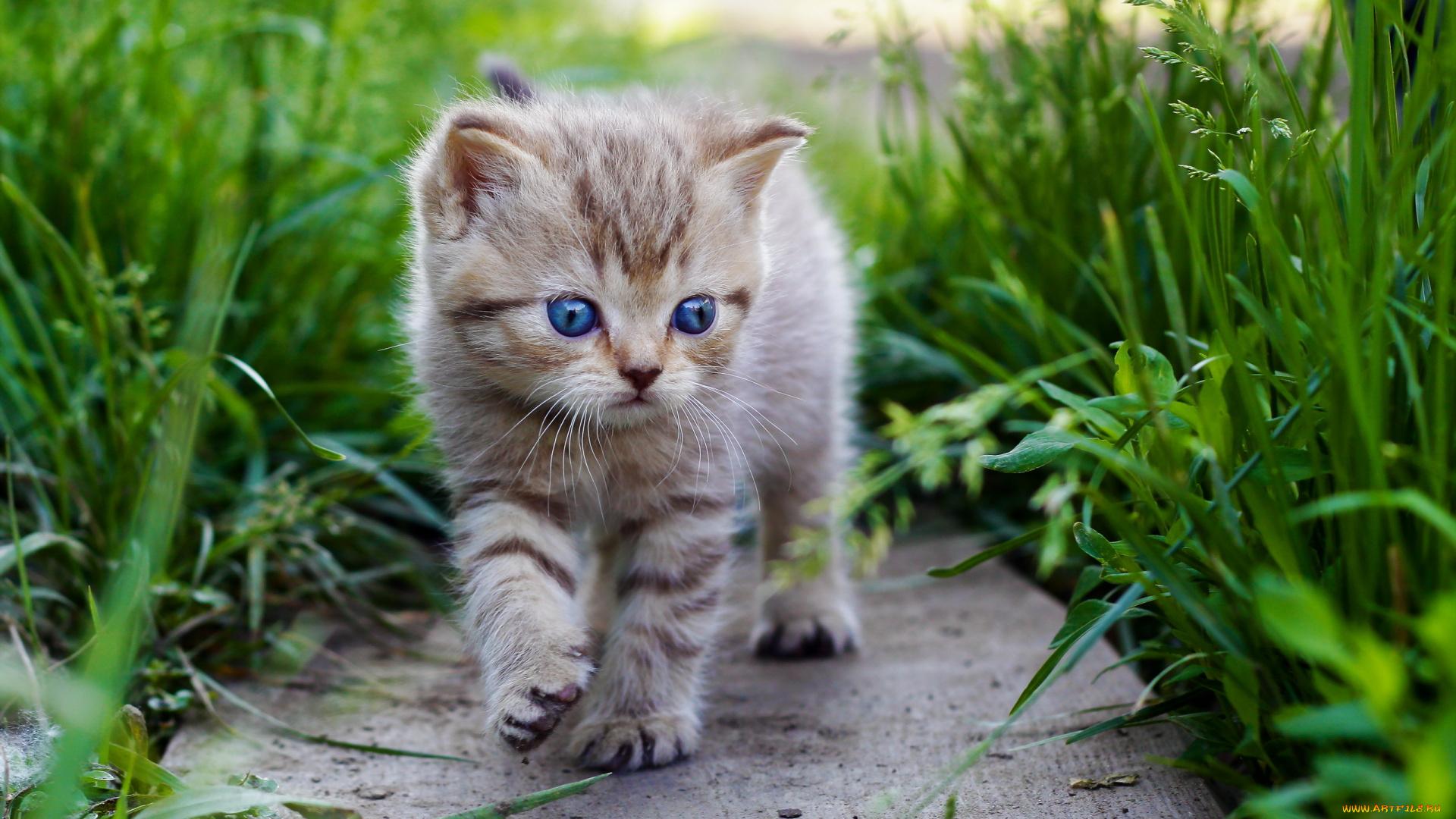 Котенок на травке  № 2954306 бесплатно