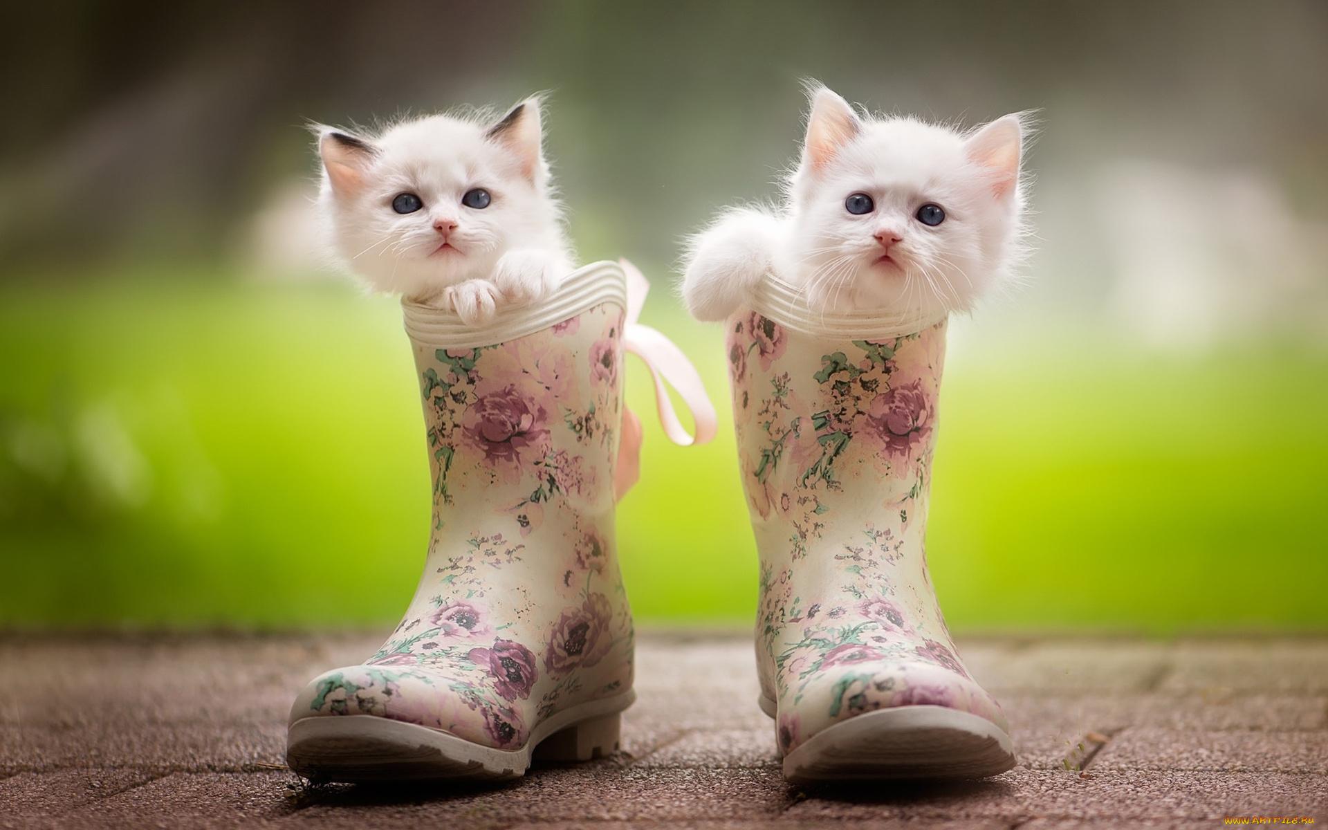котенок в ботинке  № 2016531 бесплатно