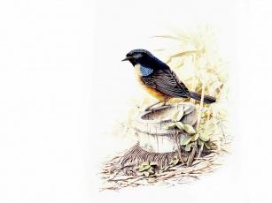 Картинка рисованные животные птицы