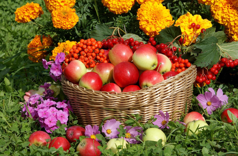 Яблоко в корзинке скачать