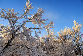 Картинка природа зима снег деревья