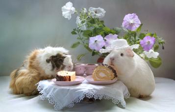 Картинка животные морские+свинки +хомяки пирожное морская свинка цветы