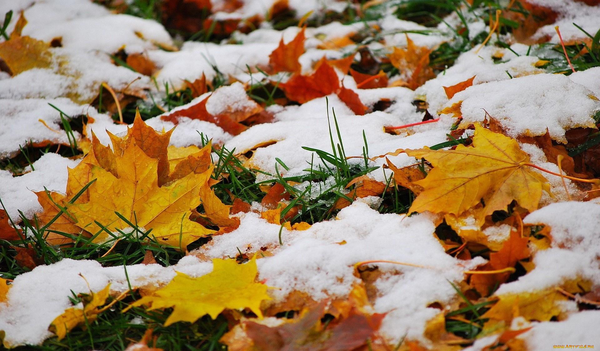 priroda-listya-trava-sneg-876704.jpg