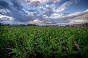 Картинка природа поля поле небо облака растения цветы