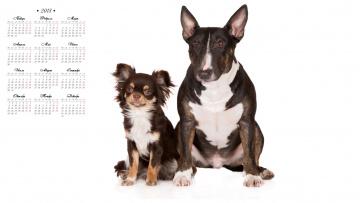 обоя календари, животные, белый, фон, собака