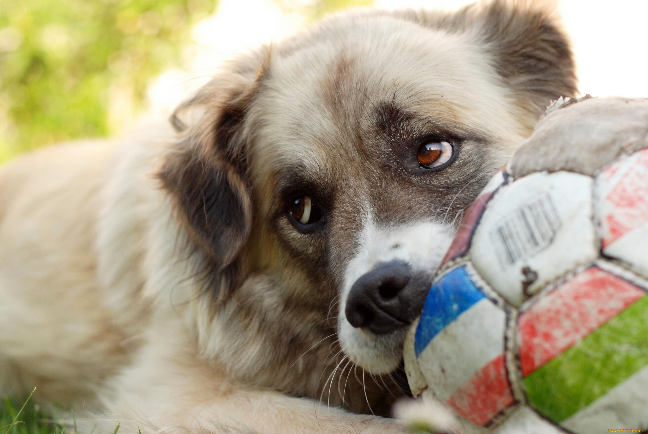 Играющие щенки без смс
