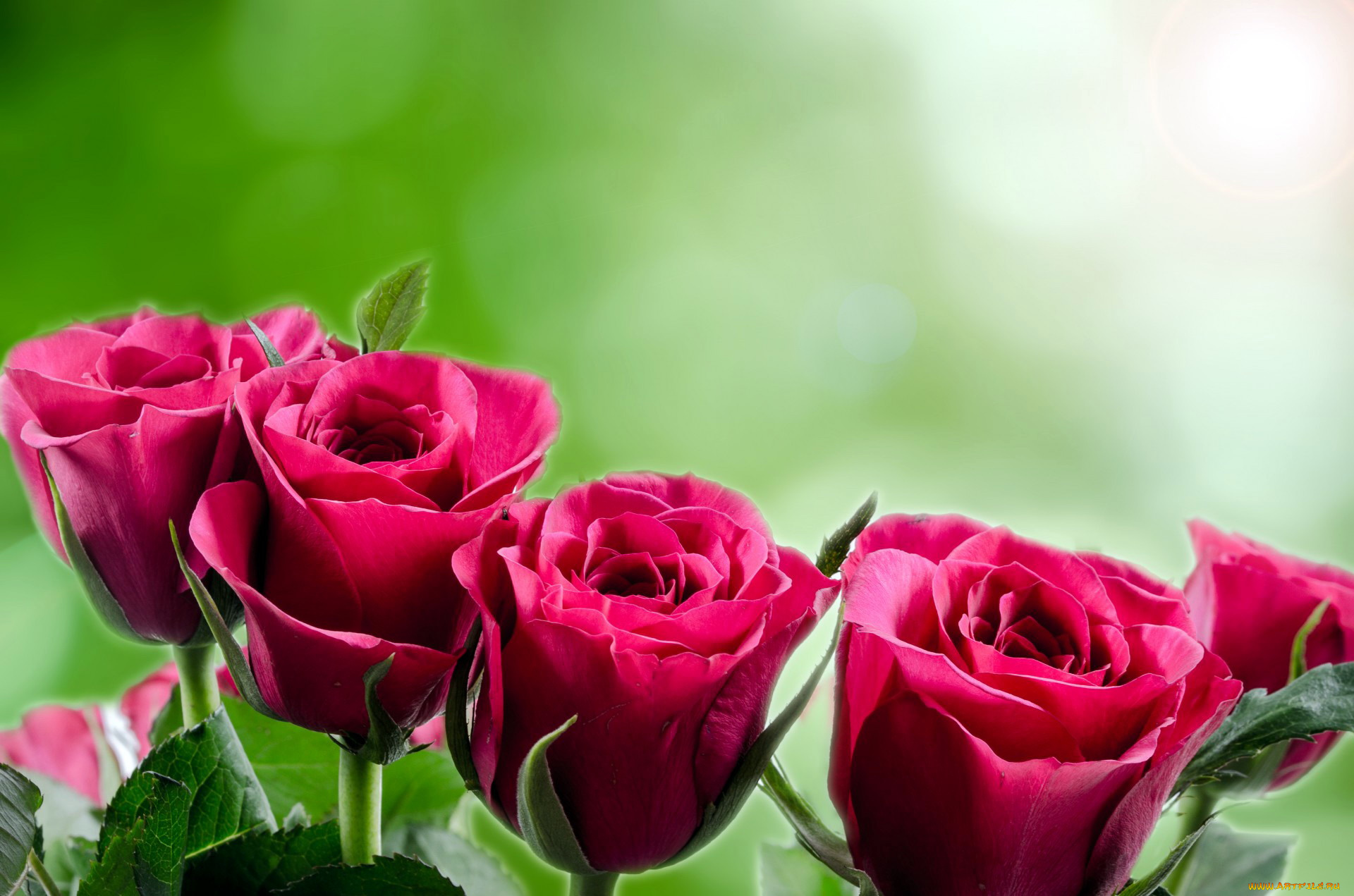 Открытка на 8 марта розы