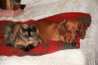 Картинка животные разные вместе кошка собака