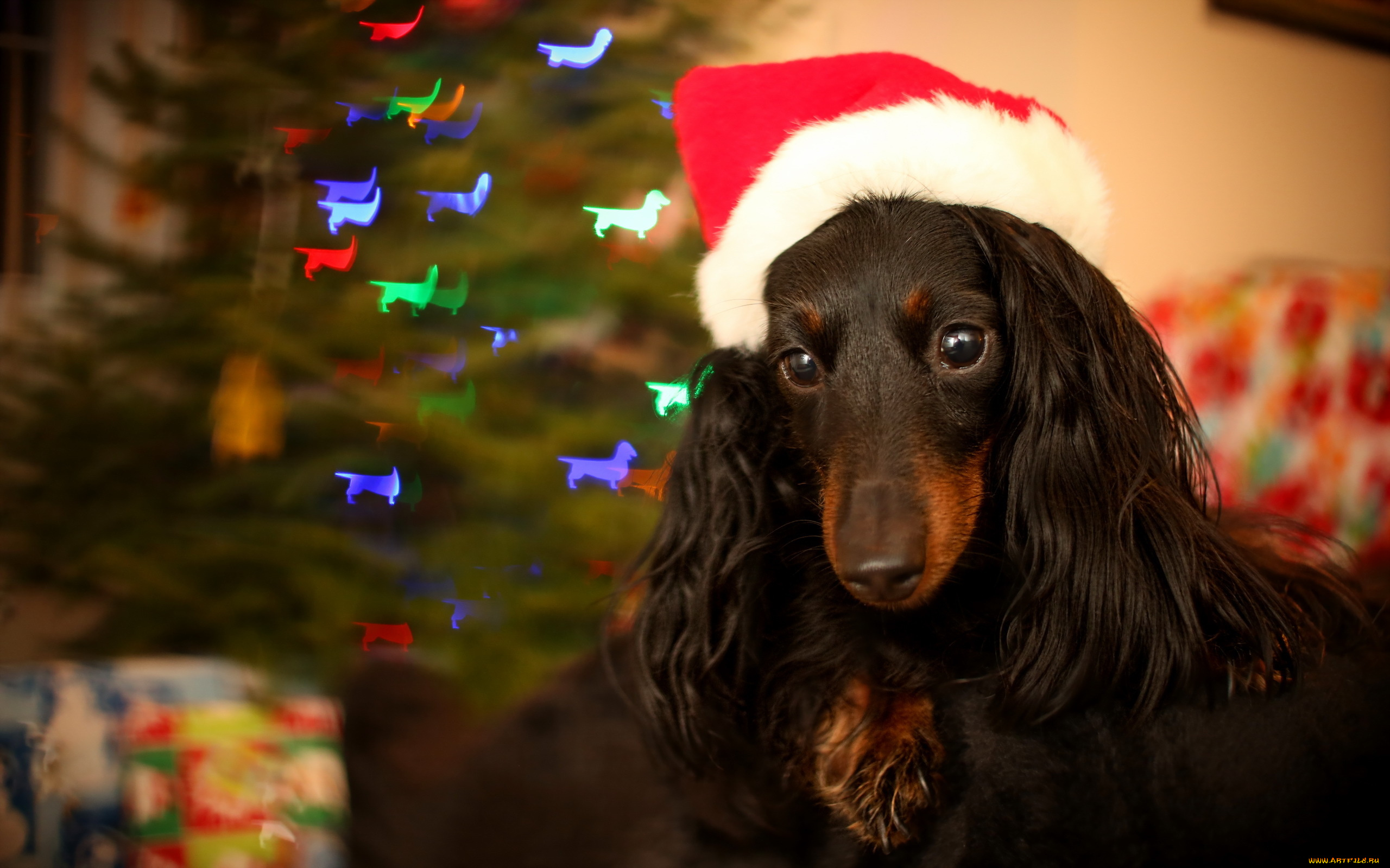 собачка в новогодней шапочке  № 1301938  скачать