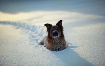 Картинка животные собаки зима снег