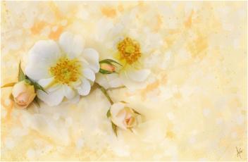 Картинка рисованные цветы розы