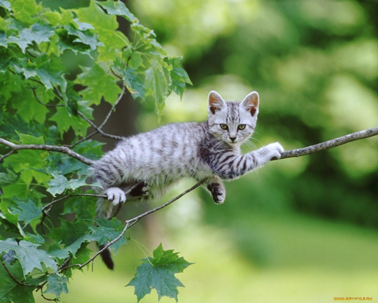 природа животные кот котенок серый журавлики nature animals cat kitten grey cranes  № 654692 загрузить