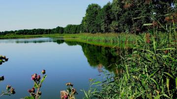 обоя природа, реки, озера, озеро, деревья