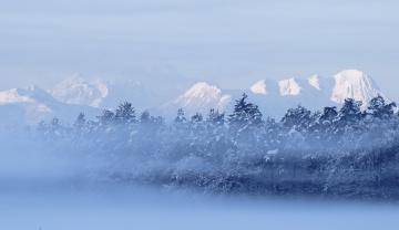 обоя природа, зима, снег, деревья