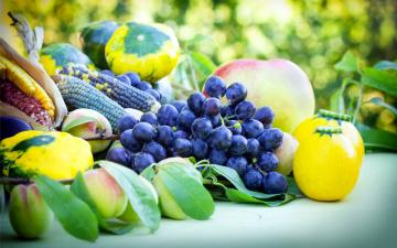 обоя еда, фрукты и овощи вместе, виноград, тыква, кукуруза, персики