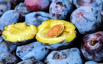 обоя еда, персики,  сливы,  абрикосы, сливы, макро, много